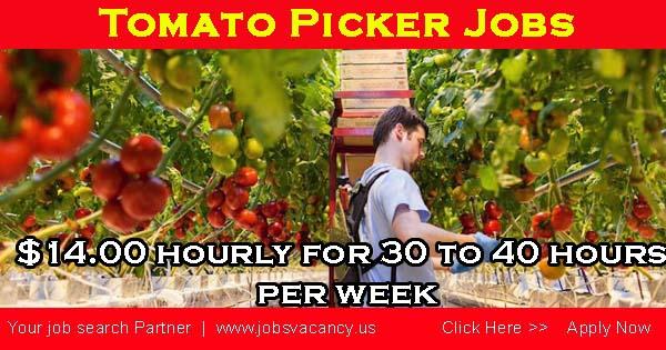 Tomato picker jobs canada