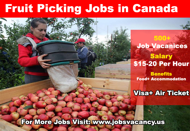 Fruit Picking Jobs in Canada